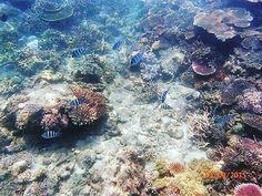 @Regrann from @ericharyono -  #snorkeling #belitungtrip #belitungisland #coral #coralreef #fish #lengkuasisland #indonesia #Regrann Fisher, Belitung, Island, Snorkeling, Coral, Places, Instagram Posts, Diving, Islands