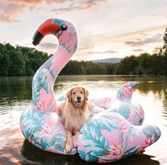 Golden Retriever - Why Are They The Perfect Pets - Doggie Woof Animals And Pets, Baby Animals, Funny Animals, Cute Animals, Cute Puppies, Cute Dogs, Dogs And Puppies, Doggies, Hamsters