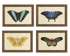 Exotic Moths | Williams-Sonoma