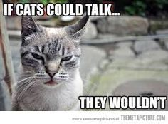 View Cat Funny Pics with Funny sayings, Funny Cat Pictures. Funny,Cute,Weird,Captioned Cat Pictures By Funny C. I Love Cats, Cute Cats, Funny Cats, Funny Animals, Cute Animals, Grumpy Cats, Animal Funnies, Animal Memes, Crazy Animals