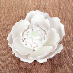 Blooming Peony - White