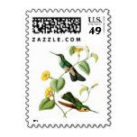White Throated Mountain Gem Hummingbird Stamp - Stamps
