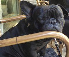 #Gaucho geniesst nach einem Besuch im #Alpineum schon das #Wochenende und ist gerade im 7. Hundehimmel.