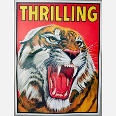 Thrilling Tiger Poster Zazzle com is part of The Tiger Posters Photo Prints Zazzle - A circus tiger growls fiercely Circus Art, Circus Theme, Circus Birthday, Circus Room, Birthday Parties, Vintage Advertisements, Vintage Ads, Vintage Labels, Vintage Circus Posters