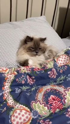 Funny Cute Cats, Cute Baby Cats, Cute Cats And Kittens, Cute Funny Animals, Kittens Cutest, Cute Dogs, Cute Wild Animals, Baby Animals Pictures, Cute Animal Photos