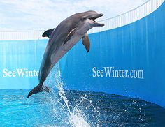 On December 24, 2002, a female Atlantic Bottlenose dolphin and male calf stranded near Gibsonton, Florida and were transported to the Florida Aquarium and then relocated to Clearwater Marine Aquarium for long-term medical care.