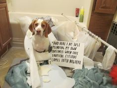 1000+ images about Pets in trouble! You gotta' love em on Pinterest | Dog shaming, Guilty dog ...