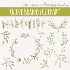 Olive Branches  Sprigs Clip Art // Photoshop Brushes // Hand Drawn Elements // Mediterranean Shrub Foliage Herb // Vector // Commercial Use