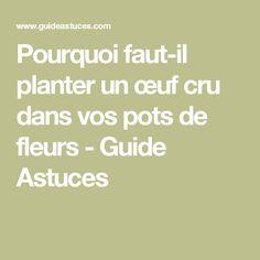 Pourquoi faut-il planter un œuf cru dans vos pots de fleurs - Guide Astuces