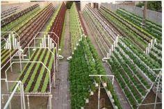 Aquaponics, Vertical Farming, Renewable Energy farming. https://www.youtube.com/watch?v=jV9CCxdkOng https://www.youtube.com/watch?v=mCCN4nq7BlQ #verticalfarming