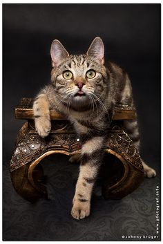 a day without a smile is a lost day..  - this pedigree European Shorthair cat mdefinately made my day and I still have to smile when I look at it thinking.. hey, what did this guy smoke? I just love it and hope that you will have to smile too!