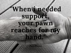#paws #pawsome #lifewithdogs #happydog #happydogs #happydogshappylife #happydogsclub #dogslovers #funnydogs Happy Dogs, Happy Life, Funny Dogs, Tattoo Quotes, Dreams, Instagram, The Happy Life, Inspiration Tattoos, Quote Tattoos