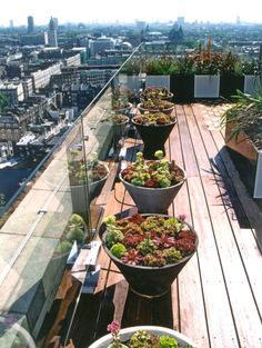 Succulent planters on roof terrace. These plants will work well in the exposed environment with winds and sun.