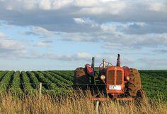 L'Agricoltura Biologica è un'agricoltura ecocompatibile che  rispetta anche chi lavora impedendo che i contadini si avvelenino maneggiando sostanze tossiche...