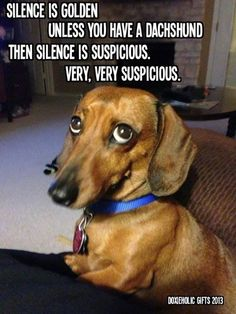 #dachshundproblems