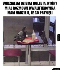 Saw a pigeon having a job interview earlier. I really hope he got it. Browse new photos about Saw a pigeon having a job interview earlier. I really hope he got it. Most Awesome Funny Photos Everyday! Because it's fun! Memes Minecraft, Video Minecraft, Really Funny, Funny Cute, The Funny, Super Funny, Memes Humor, Funny Memes, Humor Quotes