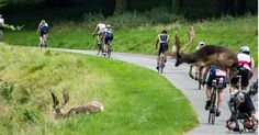 The biker was taking part in the hugely-popular Dublin City Triathlon yesterday…