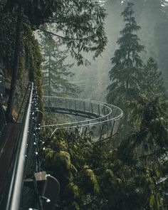 "Dani Lapointe on Instagram: ""Finally made it out for my annual trip to Capilano Suspension Bridge Park for the tail end of #canyonlights. Days like this remind me of…"""
