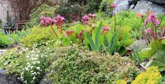 Skalka je ozdobou zahrady.