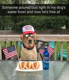 "74 Likes, 3 Comments - Daily Animal Humor (@nationalmemeographic) on Instagram: ""This one is for America. (@nationalmemeographic ) <--- Follow🇺🇸🇺🇸🇺🇸"""