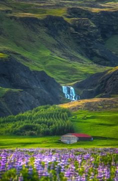 Iceland Wildflowers | Photograph Iceland Landscape with Wildflowers & Waterfall by Seejo ...