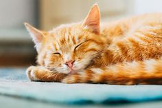 Cats sleep around 16 hours per day!