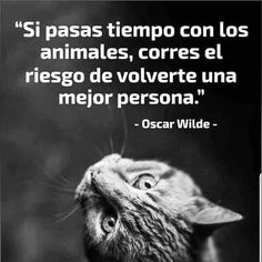 Oscar Wilde, Gato Animal, Love Dogs, More Than Words, Great Quotes, Beautiful Pictures, Kitty, Puppies, Instagram