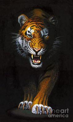 Tiger Photograph - Stalking Tiger by MGL Meiklejohn Graphics Licensing