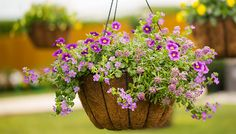 Ideas for Dramatic Hanging Planters