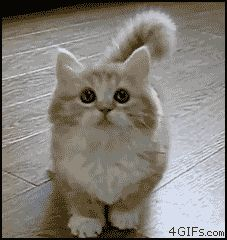 (animated gif) IT'S SOOO FLUFFY!!! Gimme gimme gimme!