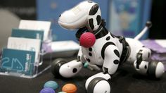 These weird pet gadgets really exist - and they're on show at CES
