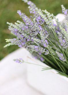 <3  Lavender