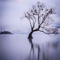 Magical Wanaka #sunrise #bestofworldassignment #lake #wanaka