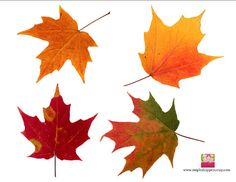 PRINTABLE DIY Maple Leaf Cut Outs Favor Tags by mapleshoppers, $8.00