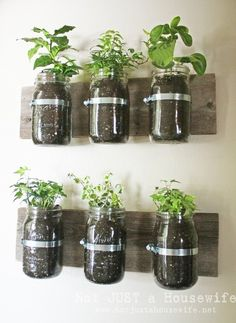 How to plant a kitchen herb garden.
