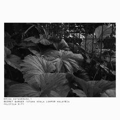 #モノクローム #loves_nature #単焦点レンズの世界  #写真好きな人と繋がりたい #写真撮ってる人と繋がりたい #私の花の写真 #はなまっぷ #beautiful_nature #マレーシア #白黒写真 #monochrome #東京カメラ部 #photographylovers #reco_ig #naturegram #デジタルでフィルムを再現したい #photographyislife  #ファインダー越しの私の世界  #photographer  #花が好きな人と繋がりたい #キタムラ写真投稿 #flowerslovers #loves_garden #photo_shorttrip #写真で伝えたい私の世界 #fujixclub #tokyocameraclub #fujifilmxt1 #ray_moment #1utama http://gelinshop.com/ipost/1521481016141084221/?code=BUdYuxLlvY9
