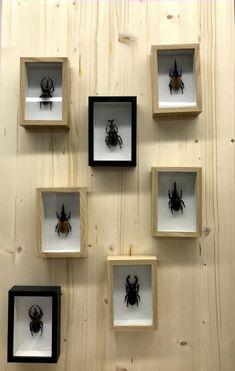 Floating Shelves, Zero, German, Change, Frame, Home Decor, Style, Sustainable Fashion, Sustainability
