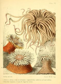 Popular history of the aquarium of marine and fresh-water animals and plants /London :Lovell Reeve,1857.