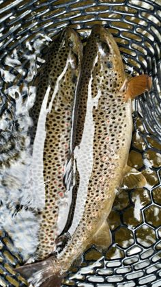Rock Creek is known for its salmonfly hatch, high fish population and diversity of trout species. The Ranch at Rock Creek in Philipsburg, Montana hosts anglers looking for a bucket list adventure.