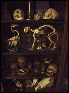 Cabinet of curiosities - skeletons. simple quest for everyone) Why did Bill… Horror Decor, Cabinet Of Curiosities, Gothic House, Gothic Mansion, Skull And Bones, Memento Mori, Natural History, Kitsch, Halloween Decorations
