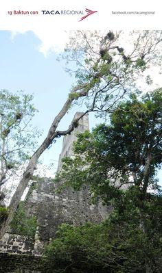 Me encantaria estar en el equinoccio de otoño de 2012 en Tikal ya q no he tenido la experiencia y poder conocer mas de culturas de nuestros hermanos centroamericanos!!!!