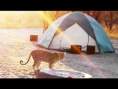 Leopard Visiting The Camp Site - Latest Sightings, ©Attie Cilliers Kruger National Park, National Parks, Latest Sightings, Okavango Delta, Camping Table, Campsite, Outdoor Gear, Wildlife, Pets