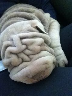 I just want to smoosh its face into mine!