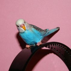Budgie Parakeet Headband Mardi Gras Bird