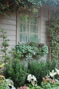 I saw this wonderful succulent window box in Raleigh, NC.    A tribute to Debra Lee Baldwin - who's inspired so many to get in touch with ...