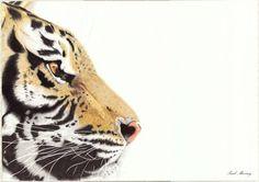 Paul Murray, Striped Death on ArtStack #paul-murray #art
