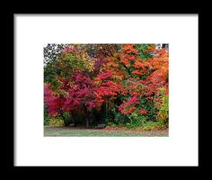wildwood park, autumn, fall, foliage, toledo, ohio, nature, michiale schneider photography, interior design, framed art, wall art