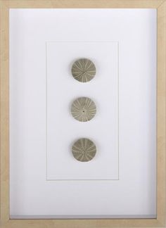 Sea Urchin Framed Wall Art