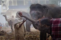 """fotojournalismus: """"Rania, a 13-month-old elephant, stretches out her trunk to touch a man's nose at the Sonepur Cattle Fair in Sonepur, India on November 15, 2011. (Daniel Berehulak/Getty Images) """""""