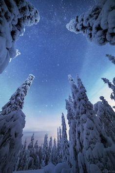 Snow-covered trees in Posio, Southern Lapland, Finland. Tiina Törmänen